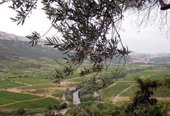 Overlooking the valley below Tautavel