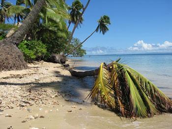 cyclone damaged trees on beach