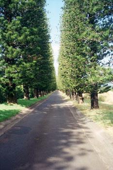 road on Maui