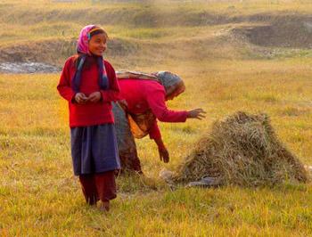 Woman tending farm field