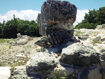 Iguana at El Ray temple