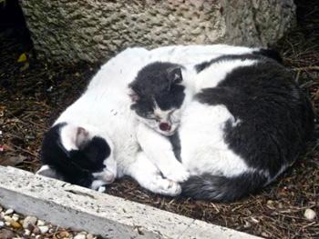 cemetery cats