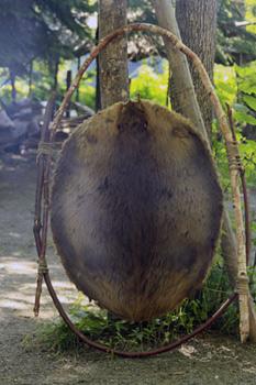 stretched beaver pelt
