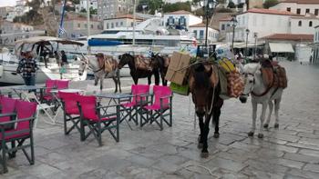 horses on a plaza