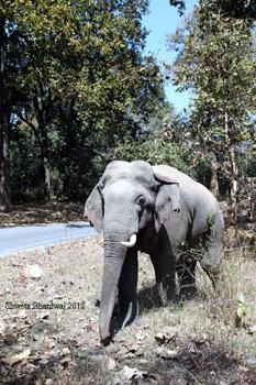 tuskar elephant