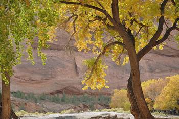 Landscape near Canyon de Chelly