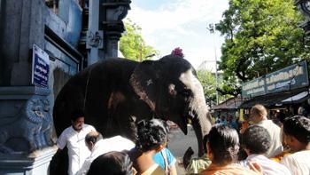 Elephant at ashram