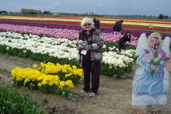 tulip farm in Mount Vernon, WA