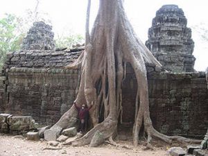 tree roots envelop temple wall