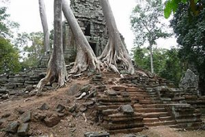 tree growing on Cambodian temple