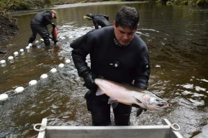 salmon fishing in Haida Gwaii