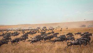 tanzania safari game drive