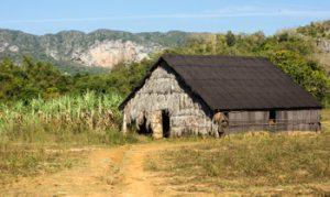 tobacco farm in Viñales, Cuba