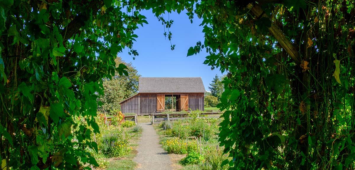 Pioneer Garden hop arch