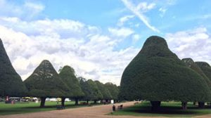 Rose garden at Hampton Court