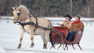 christmas horse and sleigh