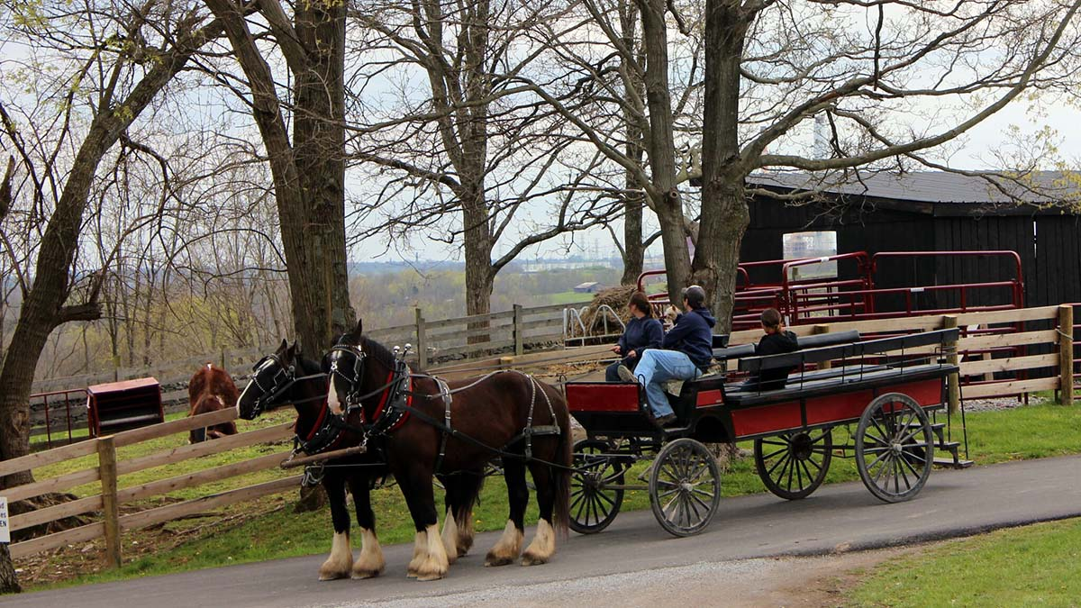 shaker horse-drawn wagon