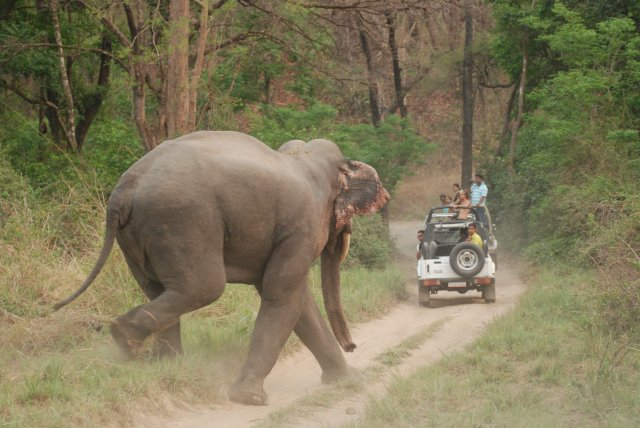 elephant at Corbett National Park