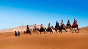 desert camel caravan