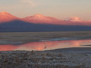 flamingos in Atacama salt lake