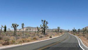 road through Joshua Tree National Park