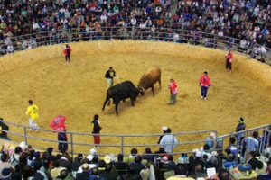 bullfight in Okinawa