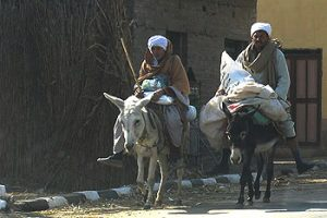 locals riding donkeys in Aswan