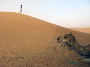 sand and camel in Sahara