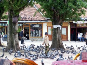 children feeding pigeons in Sarajevo
