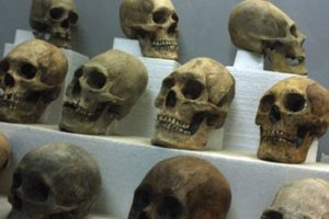 elongated skulls in Tiwanaku museum