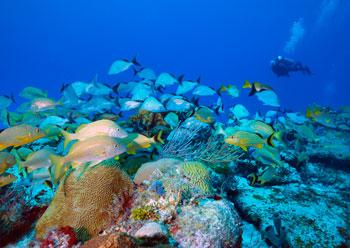 Diving in Yucatan