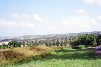 Maui farm fields