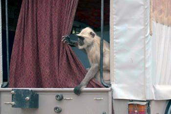 monkey inside vehicle