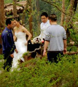panda and visitors in sanctuary