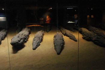 mummified crocodiles in museum