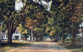 tree-lined street in Deerfield