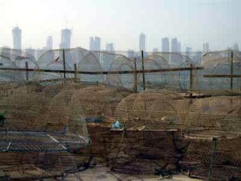 fishing nets on shore