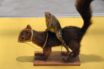 taxidermy frog riding squirrel