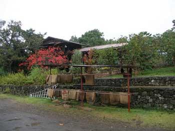 coffee plantation Kona