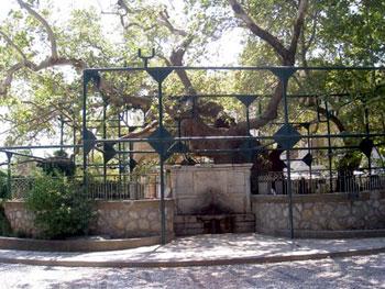 Hippocrates' tree