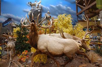 Wildlife display, Cabela's