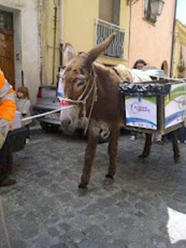 donkey on Palermo street