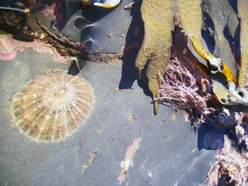 Sea life at the shore