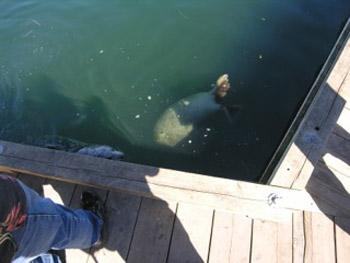sea lion at wharf