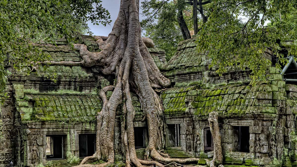 Tree growing in Angkor Wat temple