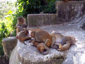 monkeys at Kathmandu temple