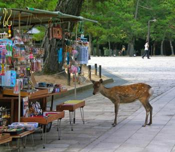 deer in Nara Japan