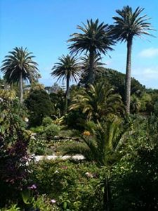 palm trees scilly isles