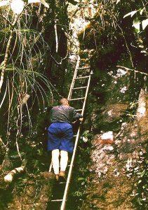 Esther climbing ladder