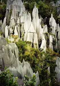 Mulu pinnacles